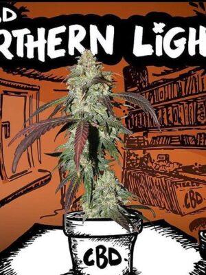 Northen Light cbd